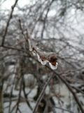 Last days of winter. Spring is comming. Tree with frozen drops of water Royalty Free Stock Image
