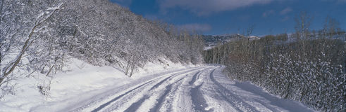 This is the Last Dollar Road after a heavy snow. It is near the Dallas Divide in the San Juan Mountains. There is snow in the tree Stock Photo