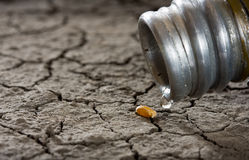 Free Last Drop And Hope For New Life Stock Photo - 12077890
