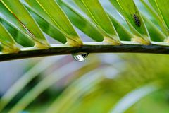The last drop... Royalty Free Stock Photo