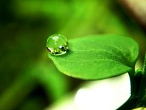 The last drops. Macro photography of dew on the little leaf Stock Photography