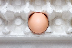 Last egg. Stock Photo