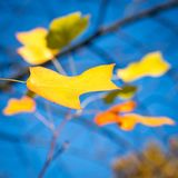 Late autumn Stock Images