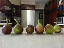The last of the fig crops Royalty Free Stock Photography
