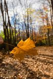 The last foliage  against forest is empty Stock Image