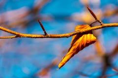 Last foliage on the tree. Lovely autumn momentum stock photos