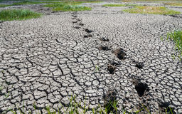 Last footprints on drought land Royalty Free Stock Images