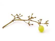 Last grape berry. Almost eaten buch of grape Stock Photo