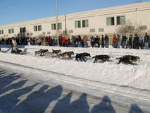 The Last Great Race. Ceremonial start of the Iditarod in Anchorage Alaska, March 7, 2009 Stock Photo