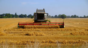 Last of the harvest. Royalty Free Stock Photos