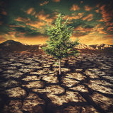 Last hope, abstract environmental backgrounds. With alone tree in the desert Stock Images