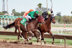 Last Horse Races In Arizona Until Fall Stock Image