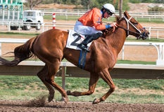 Last Horse Races In Arizona Until Fall Stock Images
