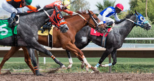 Last Horse Races In Arizona Until Fall. Turf Paradise celebrated its 61st year of operation. Last day of horse racing until fall at Turf Paradise horse racing Stock Image