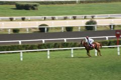 Last jockey and horse in the race running towards the finish line. Racehorse racing horse racing horse racing race track race track jockey paddock gambling Stock Photography