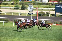 Last jockey and horse in the race running towards the finish line. Racehorse racing horse racing horse racing race track race track jockey paddock gambling Stock Images