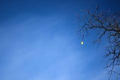 Last leaf Stock Image