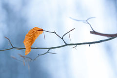 Last leaf Stock Photography