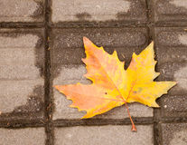 The Last Leaf Of Autumn Stock Photos