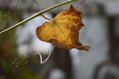 The last leaf on a branch stock photos