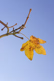 Last Leaf of Fall Stock Image