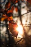 Last leaf Stock Images