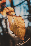 Last leaf Royalty Free Stock Photos