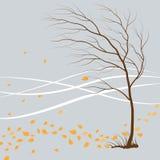 Last_leaf Stock Image