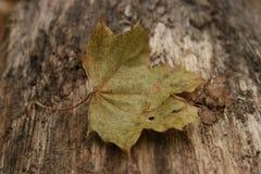 The last leaf Stock Photos