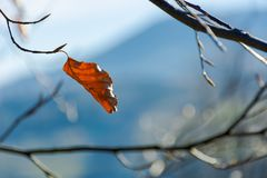 Last leaf on the tree royalty free stock photography