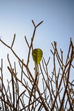Last leaf on the tree Royalty Free Stock Photos