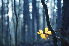 Last leafs Stock Image