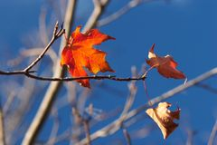 Last leaves Stock Photo