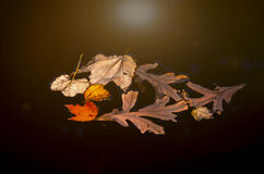 Last Leaves of Autumn Royalty Free Stock Photos