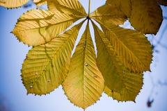 Last leaves on tree Stock Images
