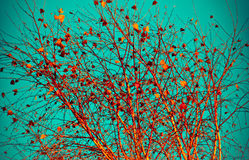 Last leaves on a tree Royalty Free Stock Image