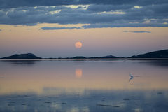 The last light. An Egret fishes at last light while the  moon rise over a still bay Royalty Free Stock Image