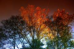 Last light. Trees in autumn before sunset stock photos