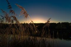 Last light of the day. With reeds in foreground overlooking a lake stock photo