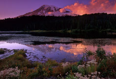 Last Light on the Mountain. Twilight at Reflection Lake - Mt Rainer National Park Royalty Free Stock Photo