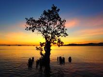 Last Mangrove Standing. Mangrove standing in an ocean near to a beach Stock Photo