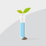 Last plant from a test tube Stock Image