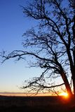 Last rays shining through the branches of an oak tree. Last rays of an autumn sunset, as the sun`s rays shine through the barren branches of a tree whose leaves Stock Photography