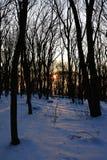 Last rays of sun looking through bare naked broadleaf trees during winter season. Location Zobor hill near Nitra city. Slovakia Royalty Free Stock Photography