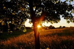 Last rays. Of sunshine on a field Royalty Free Stock Photos