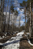 Last snow. Sunny day in the spring forest Stock Images