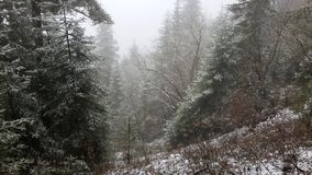 Last snow in the mountains Royalty Free Stock Photos