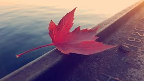 The Last Son of Autumn Stock Photos