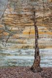 Last Stand in Illinois Canyon. Deep inside Illinois Canyon, the glowing St. Peter Sandstone cracked walls surround a burnt-out tree. Once a home to birds Royalty Free Stock Photography