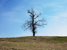 Last standing tree Royalty Free Stock Photography